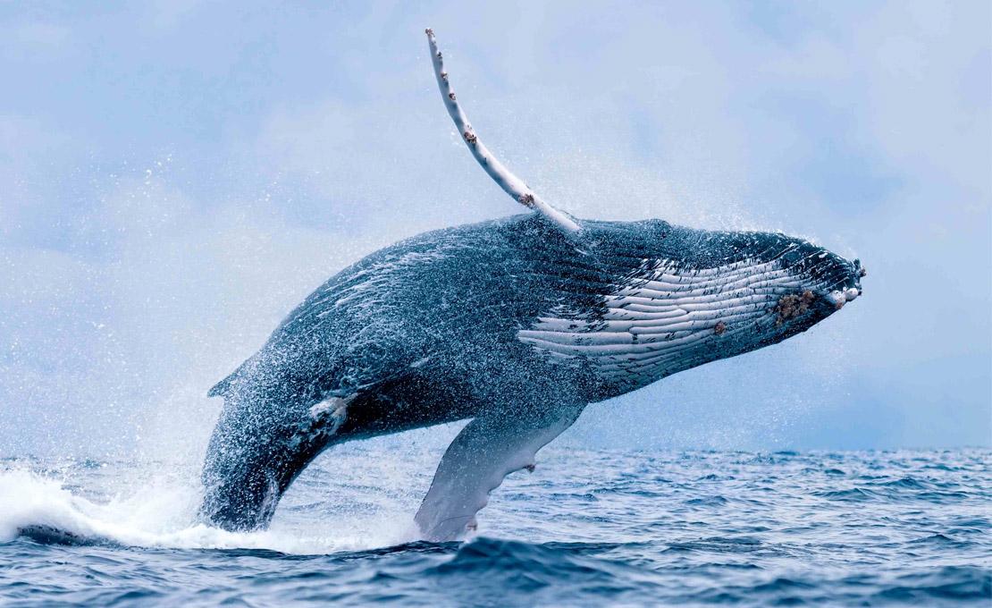 Avistamiento-de-ballenas-delfines