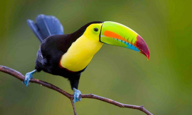 Observacon-de-aves