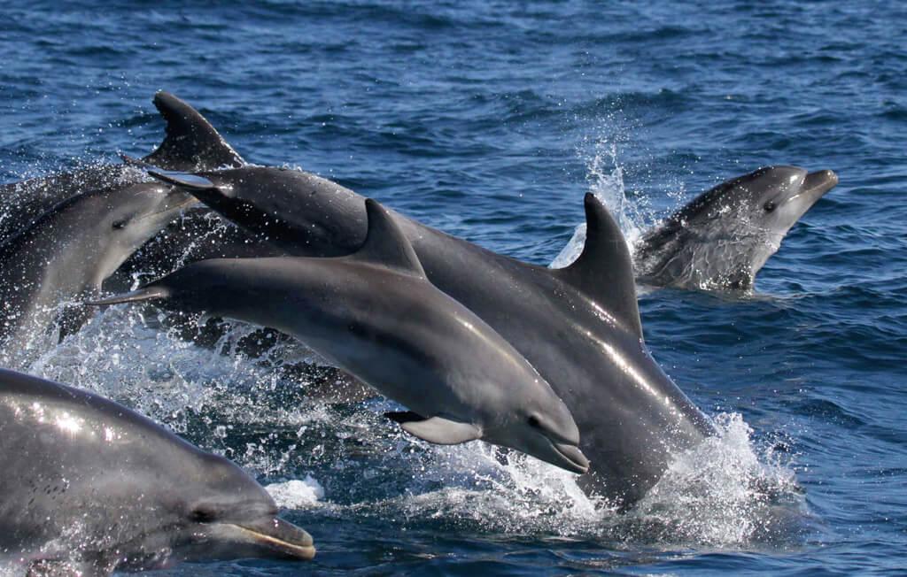 actividades-marino-ballena